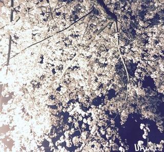S__34209800.jpg